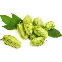 Hops (Humulus lupulus) extract 600mg - 200 capsules