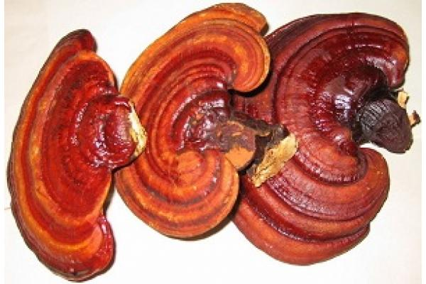 Reishi Extract Polysaccharides 10% (fruit body) & 4% Triterpenoids + 20mg Vitamin C 100 capsules à 500mg